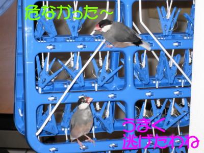 b0158061_19551637.jpg