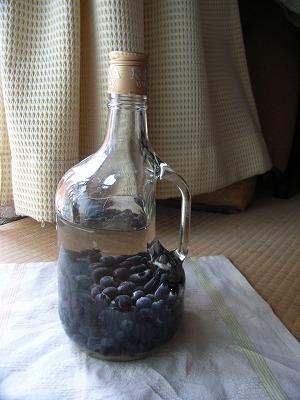 果実酒_e0114895_1775114.jpg