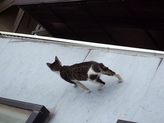 PUSSY CAT_b0132101_19471389.jpg