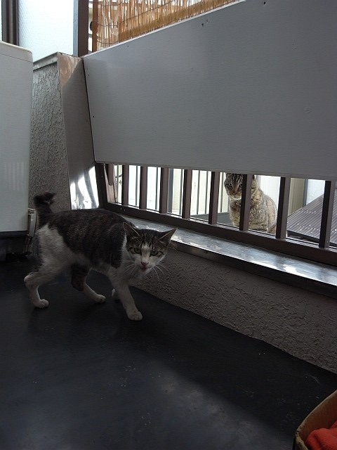 PUSSY CAT_b0132101_19472738.jpg