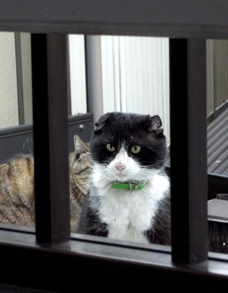 PUSSY CAT_b0132101_19473963.jpg