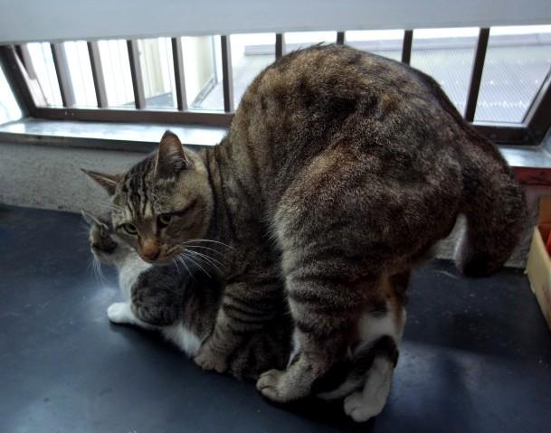 PUSSY CAT_b0132101_20244951.jpg