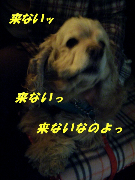 b0067012_2354637.jpg