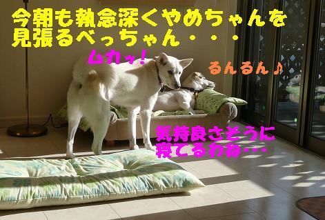 ヤキモチべっちゃん_f0121712_10423336.jpg