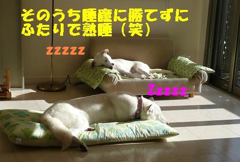 ヤキモチべっちゃん_f0121712_10424159.jpg