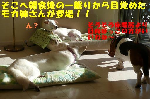 ヤキモチべっちゃん_f0121712_10424891.jpg