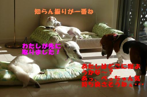 ヤキモチべっちゃん_f0121712_10425632.jpg
