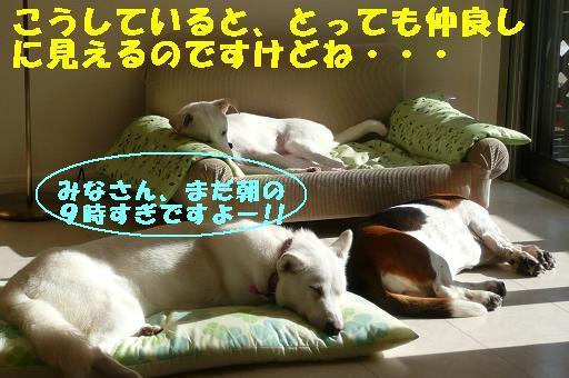 ヤキモチべっちゃん_f0121712_10431098.jpg