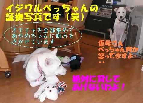 ヤキモチべっちゃん_f0121712_10432845.jpg