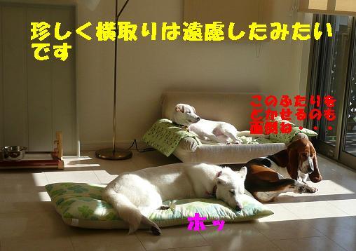 ヤキモチべっちゃん_f0121712_1043423.jpg