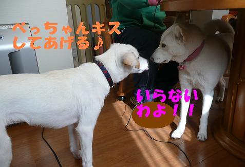 ヤキモチべっちゃん_f0121712_10435589.jpg