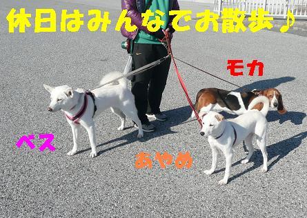 ヤキモチべっちゃん_f0121712_1044118.jpg