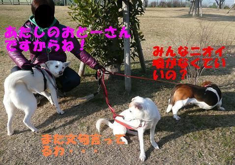 ヤキモチべっちゃん_f0121712_10441922.jpg
