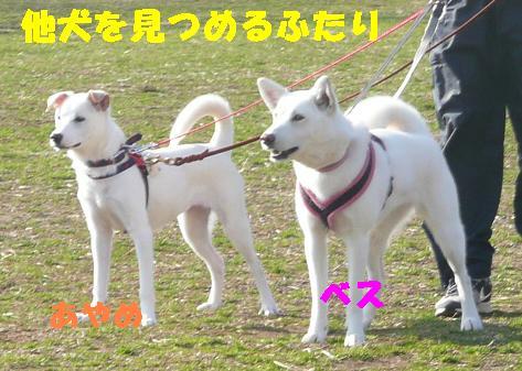 ヤキモチべっちゃん_f0121712_10442572.jpg