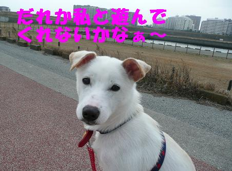 ヤキモチべっちゃん_f0121712_10472539.jpg
