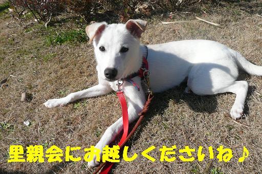ヤキモチべっちゃん_f0121712_10481193.jpg