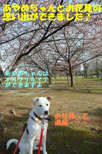 ヤキモチべっちゃん_f0121712_104816.jpg