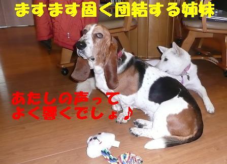 ヤキモチべっちゃん_f0121712_1049094.jpg