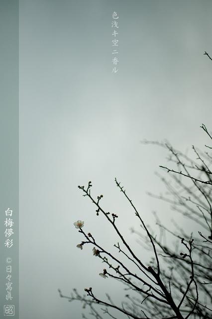 微・香_e0117517_2422285.jpg