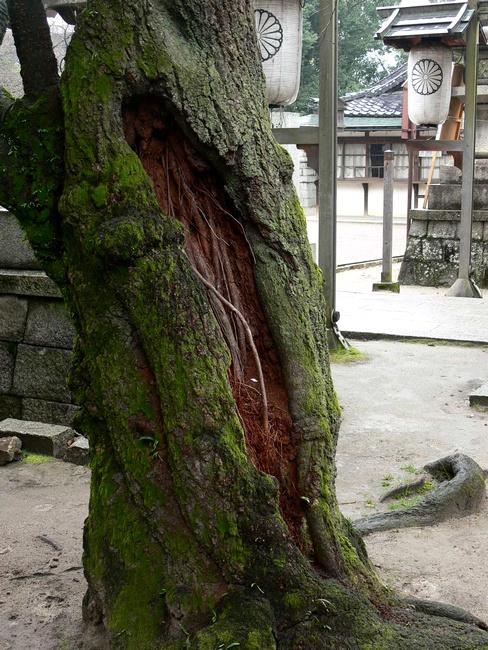 「京都・藤森神社の木…①」_d0133024_18433286.jpg