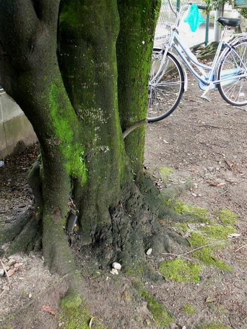 「京都・藤森神社の木…①」_d0133024_18443274.jpg