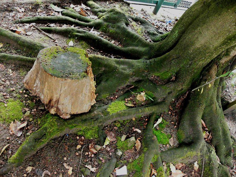 「京都・藤森神社の木…①」_d0133024_18444594.jpg