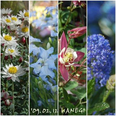植木市の花