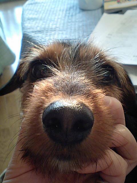 バレンタイン&犬の性格_b0123371_430836.jpg