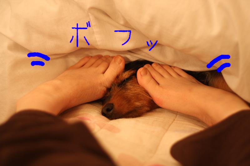 バレンタイン&犬の性格_b0123371_4324586.jpg