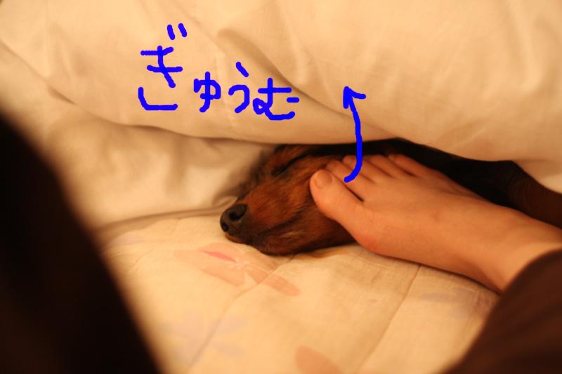 バレンタイン&犬の性格_b0123371_4333031.jpg