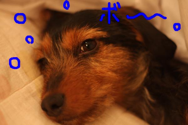 バレンタイン&犬の性格_b0123371_4334996.jpg