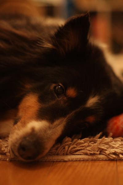 バレンタイン&犬の性格_b0123371_4341126.jpg