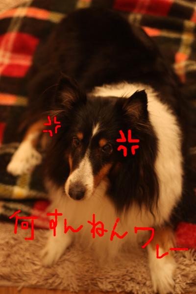 バレンタイン&犬の性格_b0123371_4351244.jpg
