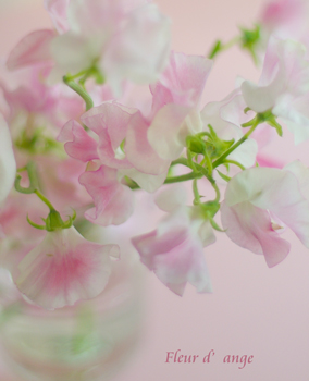 ◆春の香り、スイートピー◆_b0111306_21362514.jpg