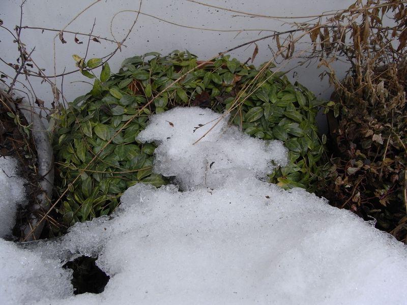 2月に春の匂い_c0025115_1728868.jpg