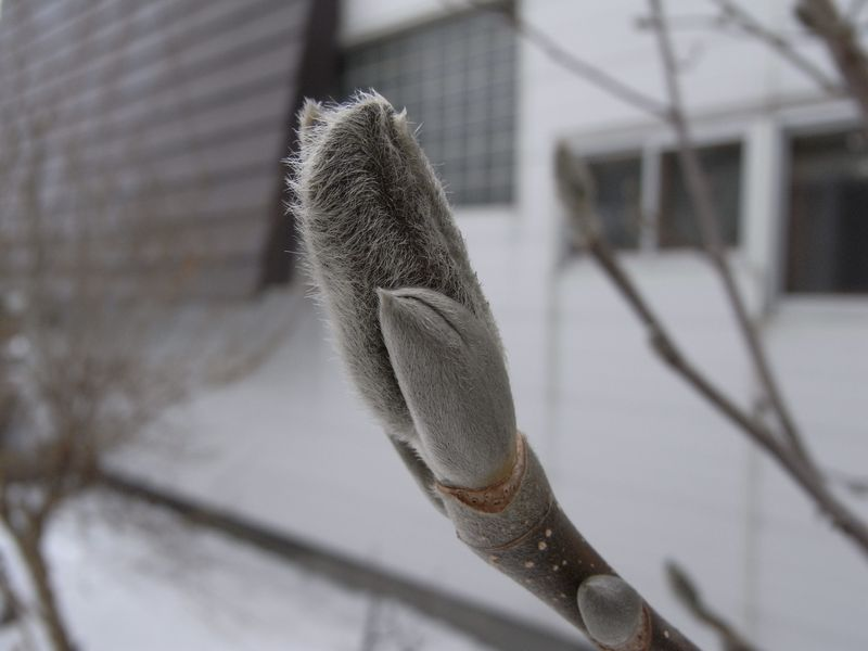 2月に春の匂い_c0025115_17304045.jpg