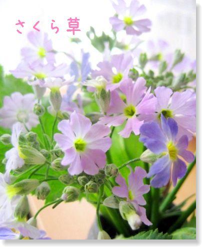 f0136850_0572784.jpg
