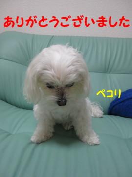 f0145192_20551262.jpg