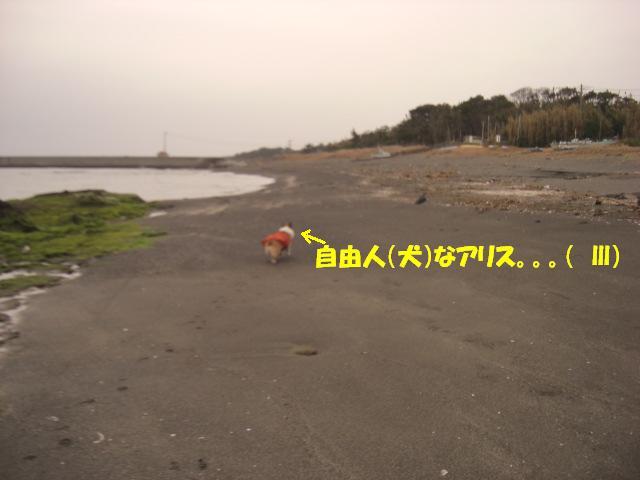 f0182121_8471516.jpg