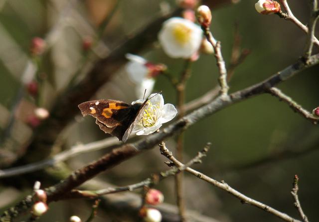 春の予感_d0074828_2354096.jpg