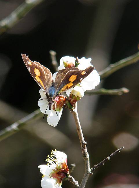 春の予感_d0074828_23542133.jpg