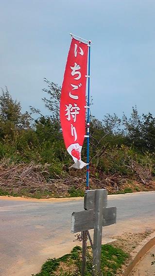 2月15日沖縄でイチゴ狩り♪_c0070933_21312150.jpg