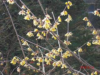 ここにも春の息吹が……_b0123970_2326324.jpg
