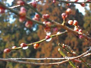 ここにも春の息吹が……_b0123970_23312746.jpg