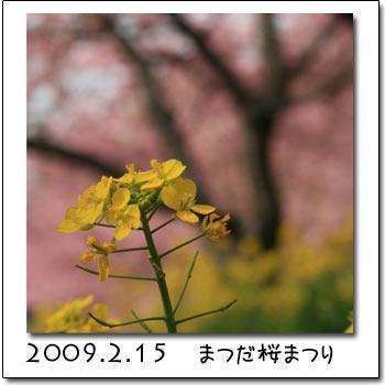 b0024183_173576.jpg