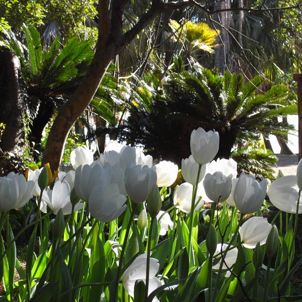 春いちばん♪ by GX100_c0049299_205314.jpg