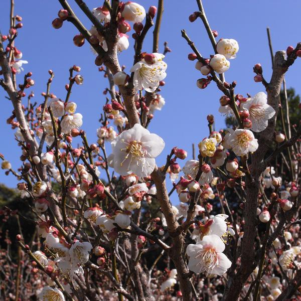 春いちばん♪ by GX100_c0049299_2063573.jpg