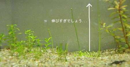 c0147699_1565991.jpg