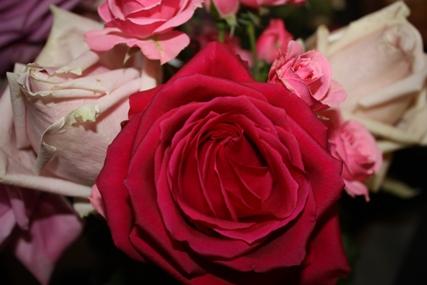 綺麗な花・・・♪_f0181000_22133047.jpg