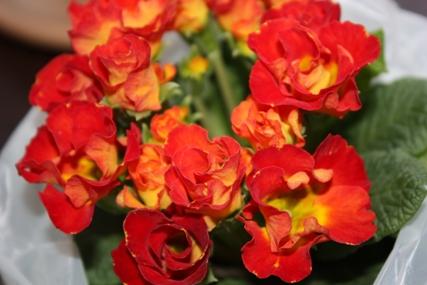 綺麗な花・・・♪_f0181000_2252344.jpg